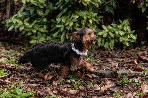 cani al matrimonio- Dog Special Guest