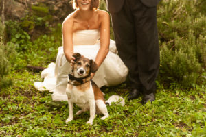 wedding dog sitter - Dog Special Guest