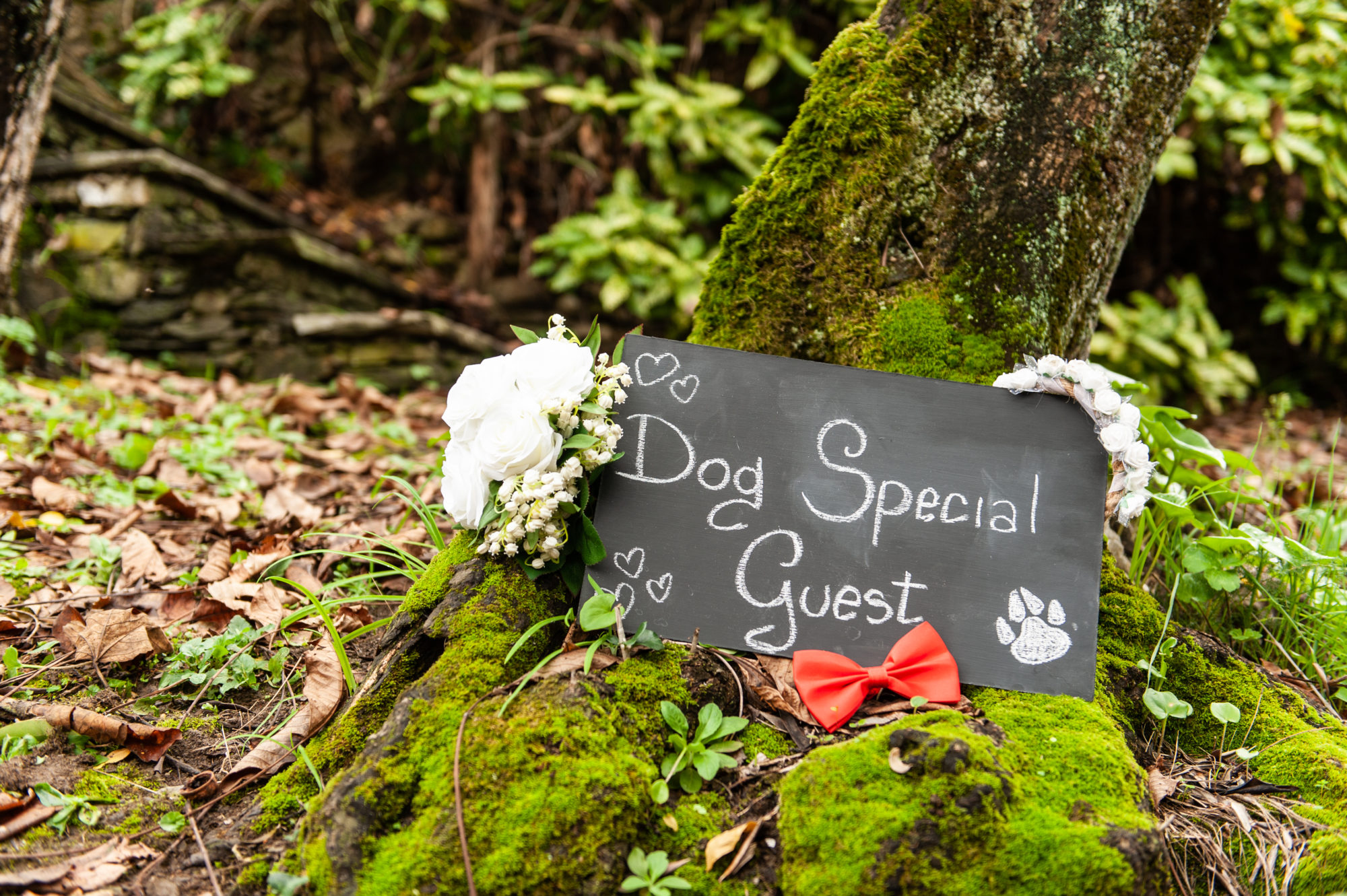 Dog_Special_Guest