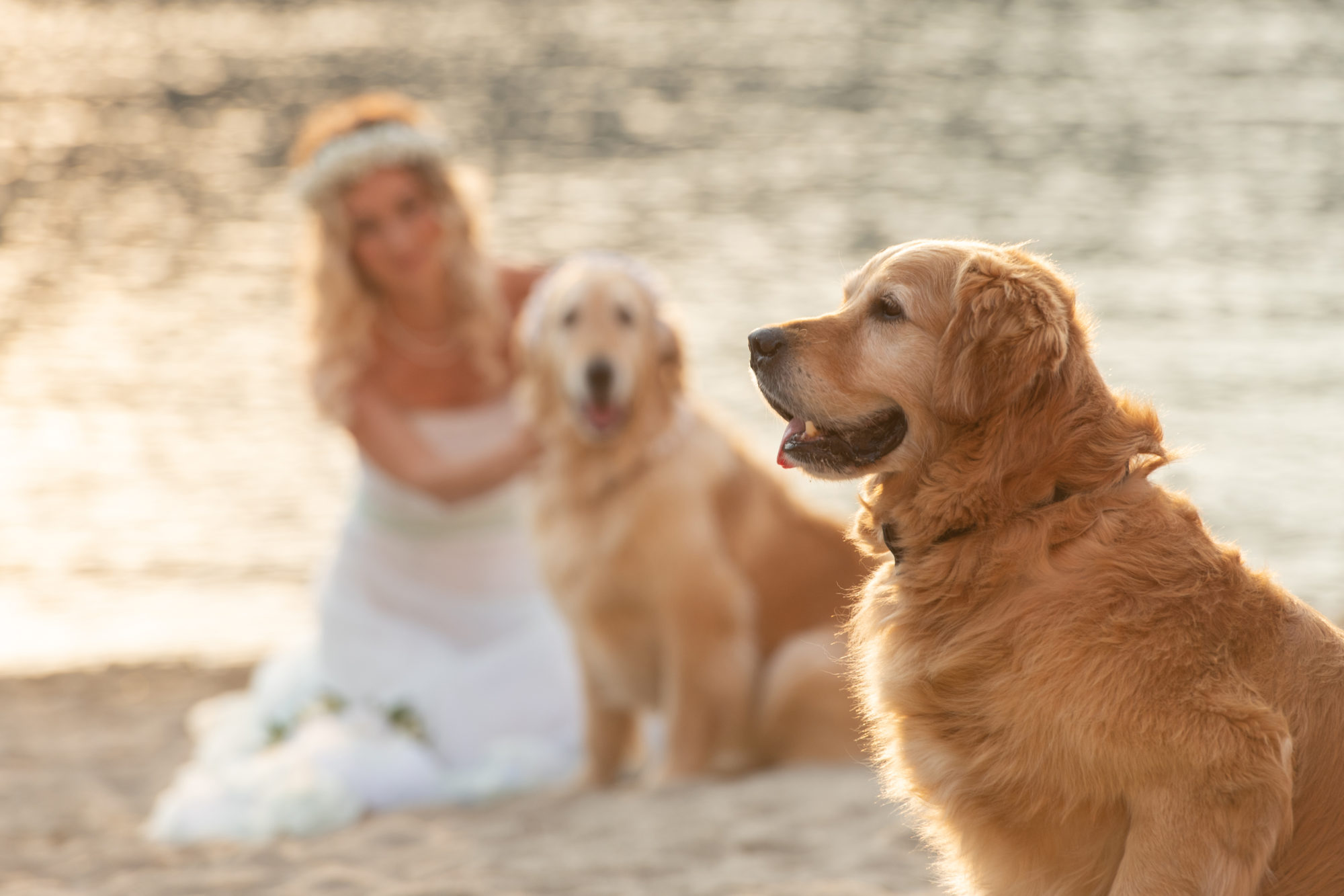 wedding dog sitter - Dog Special Guest