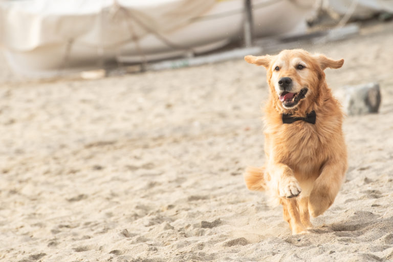 event dog sitter