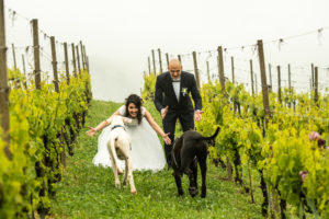 Dog Special Guest _ weddingdogsitterliguria