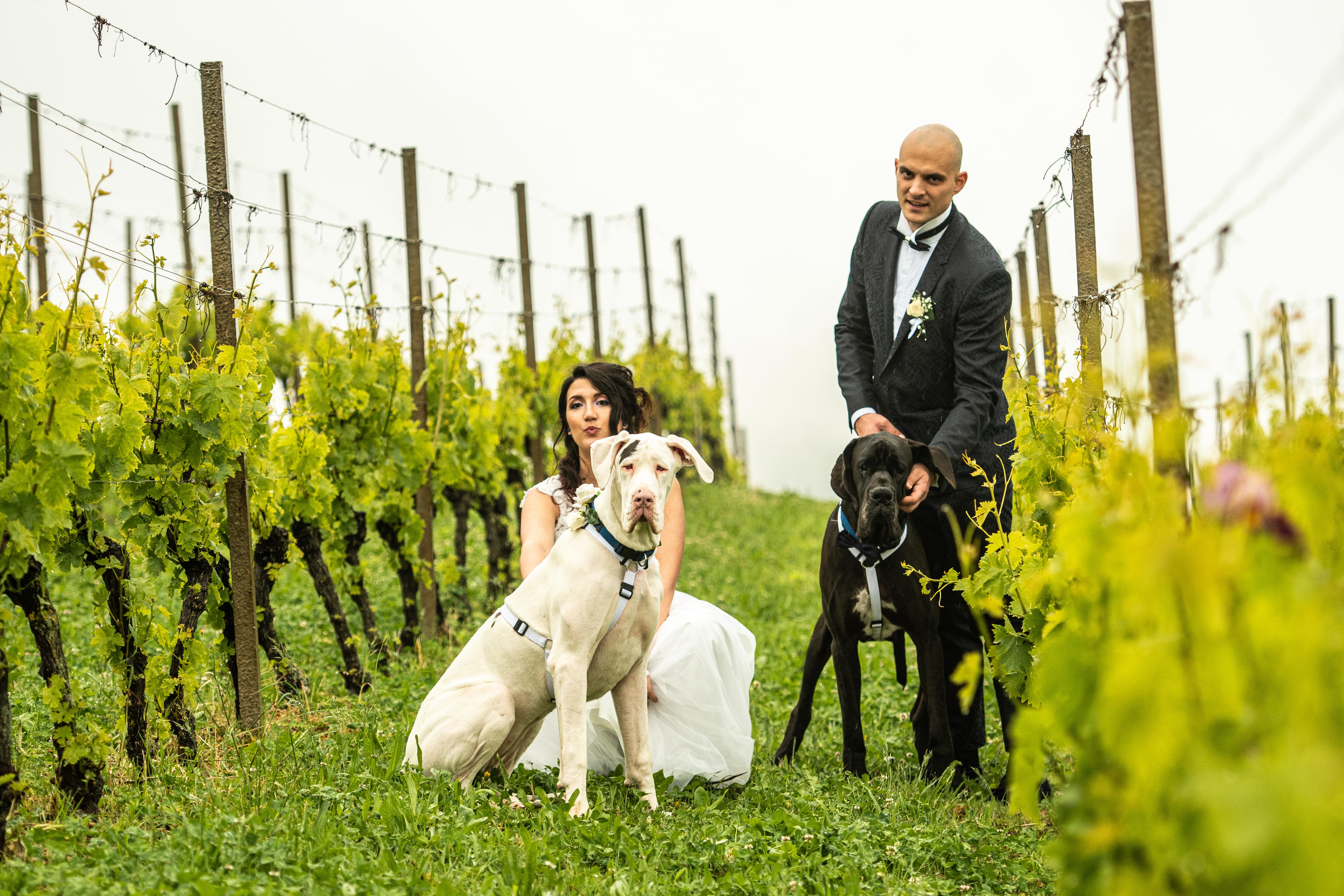 Dog Special Guest _ weddingdogsitterliguria
